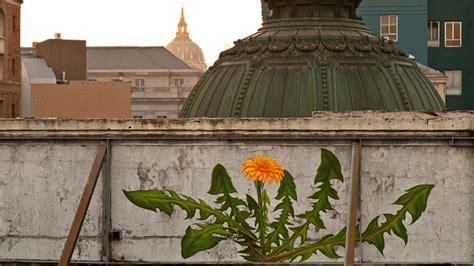 weeds slowly overtake city walls   world