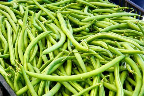 miss gardening grow green beans indoors this winter
