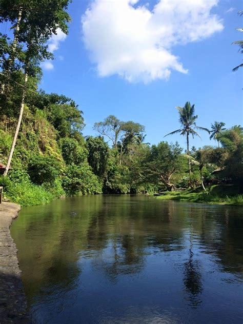 bali turisti per caso ubud forest viaggi vacanze e turismo turisti per caso