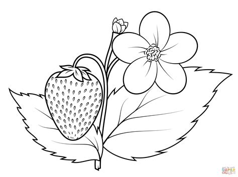 Strawberry Plant Coloring Page Free Printable Coloring Pages Coloring Pages Plants