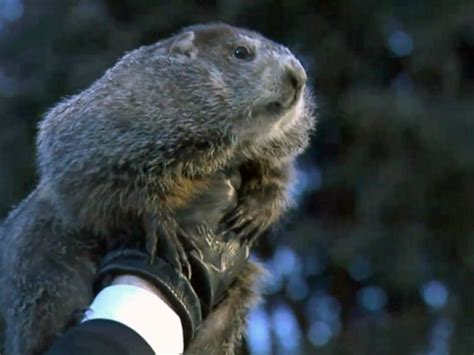 the groundhog day groundhog day 2018 punxsutawney phil sees shadow six