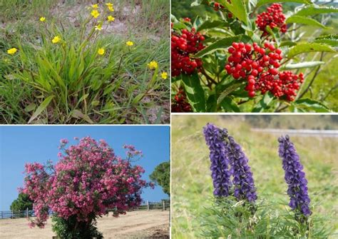 mountdweller lima jenis tanaman  beracun  dunia