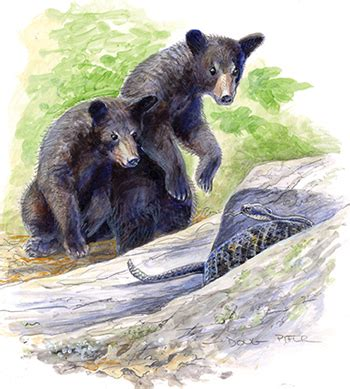 black bear wildlife note