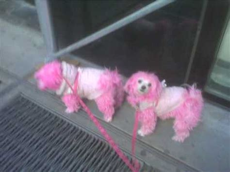 pink puppies pink puppies on a walk