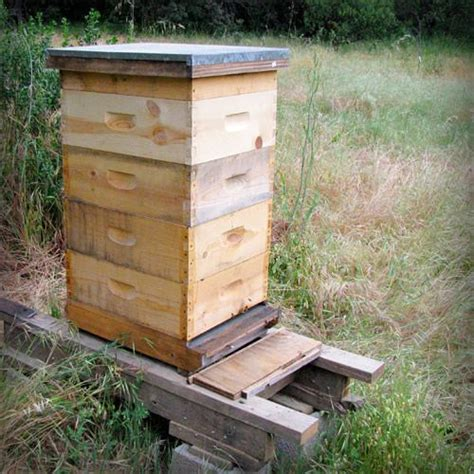 bee hive box thesis help the hive pinterest