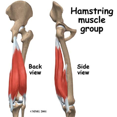 hamstring muscles diagram proper landing mechanics coaching gymnastics in the new