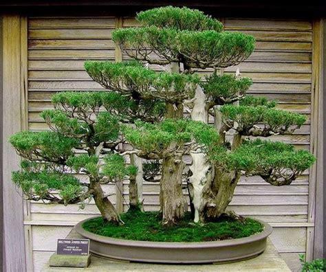 bonsai  images japanese garden bonsai garden