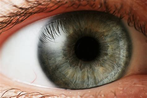 what part of the eye gives it color structures of the eye part 2 the iris steemit