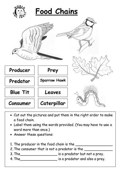 Food Chain Worksheet by 8 Best Images Of Ecosystem Food Chain Worksheet High