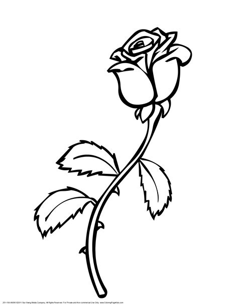 Rose Vines Drawings Clipart Best Roses Colouring Pages
