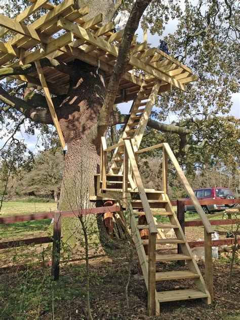 treehouse stairs   tree house designs building