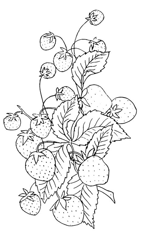 Vintage Clip Art   Strawberry Embroidery Pattern   The