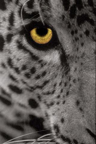 leopard icon gray | visit www.iphonesavior.com and click