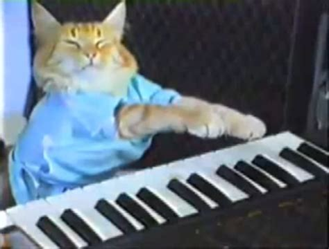 keyboard cat tutorial le site du jour keyboard cat lib 233 ration