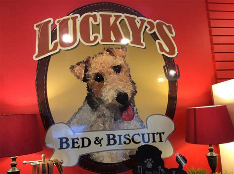 lucky s bed and biscuit lucky s bed biscuit manahawkin nj pet supplies