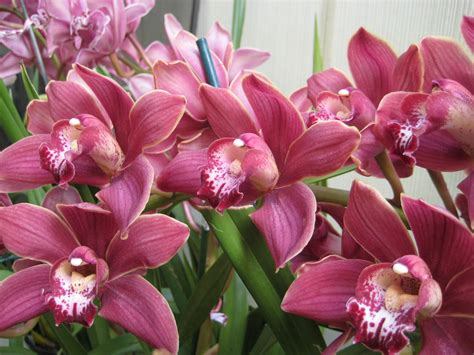 Flowers Plants by Taking Care Of Blooming Orchid Plants Orchid Flowers
