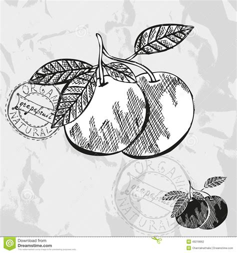 design element citrus hand drawn fruits vector illustration cartoondealer com