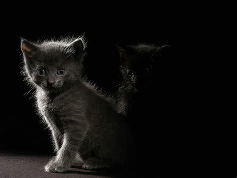 cat wallpaper for mac kitty world