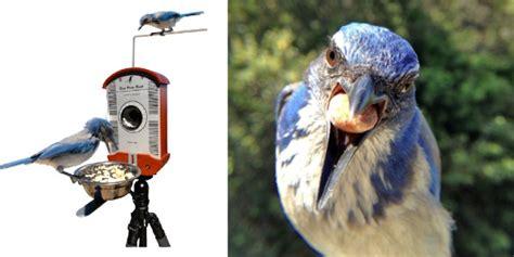 bird photography bird feeders best wild bird feeders