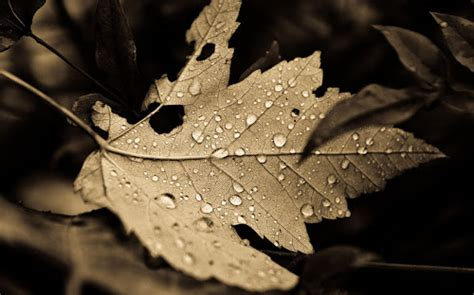 wallpaper air diatas daun gambar gambar daun kering yang cantik