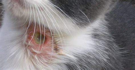 Sisir Kutu Untuk Kucing meonginfo cara atasi masalah kutu pada kucing