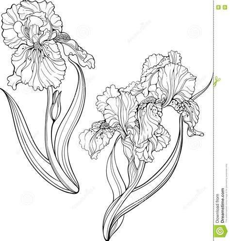coloring pictures of iris flowers may flowers coloring pages page iris flower and printable