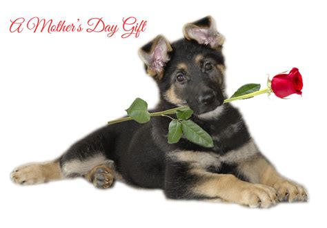 day with new puppy mothers day ecard page fidelco guide foundation inc