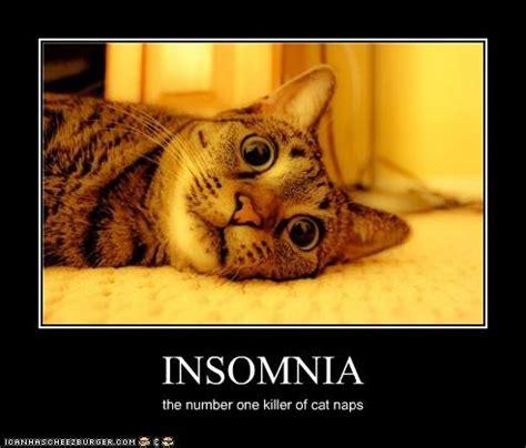 Insomnia Meme - image gallery insomnia cat meme