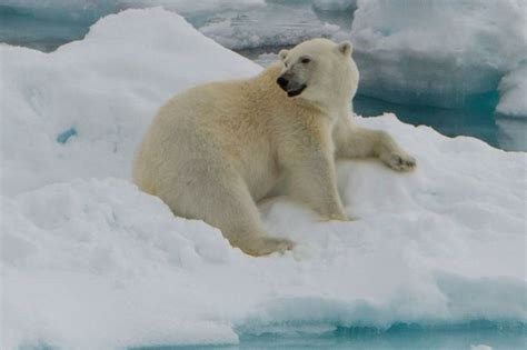 princess cruises polar online 80 best high arctic expedition cruises images on pinterest