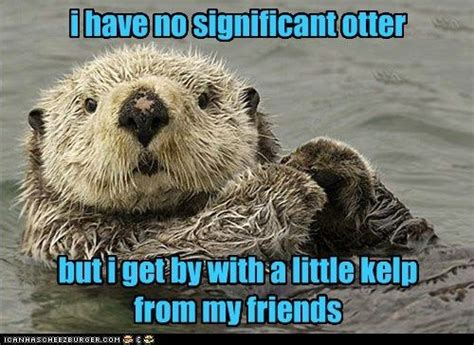 Sea Otter Meme - i have no significant otter but i get by with a little
