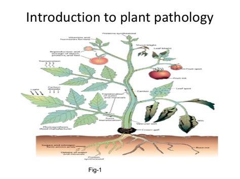 Introduction Of Plant Disease - b sc agriculture i principles of plant pathology u 1 1 introduction t