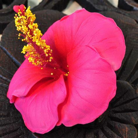 hibiskus zimmerpflanze kaufen bl 252 ten kunstblumen hibiskus rot