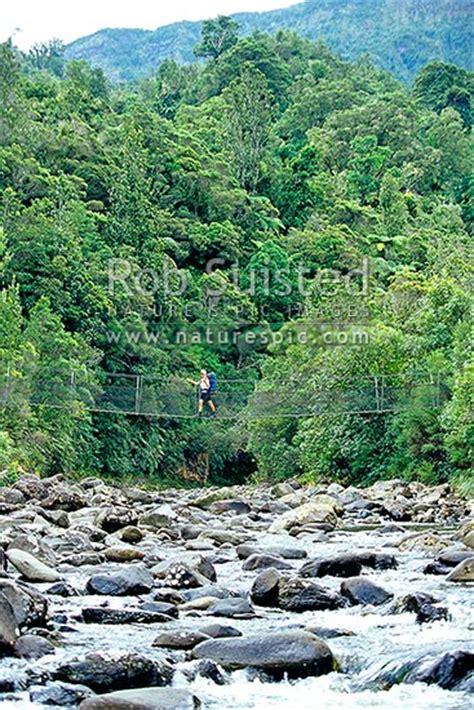 thames river valley trail trer crossing a swingbridge over the kauaeranga river