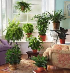 Tropical house plants for your garden room interior design