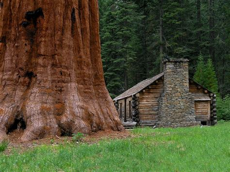 cabin yosemite national park panoramio photo of quot pioneer cabin quot mariposa grove