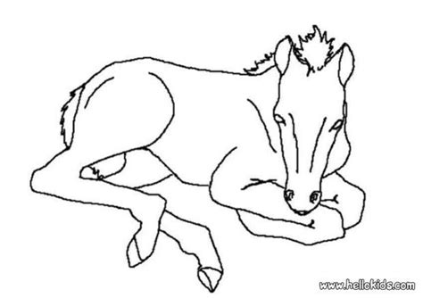 Coloring Pages Of Horses And Foals by Foal Coloring Pages Hellokids