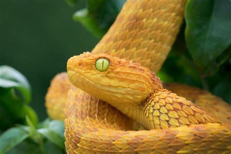 imagenes de serpientes oscuras 191 por qu 233 las serpientes perdieron sus patas tecreview