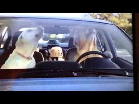 subaru commercial golden retriever subaru commercial 2014 car seat autos post