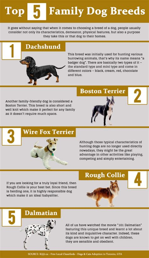 family breeds breeds for families best dogs as pets for children the best breeds for