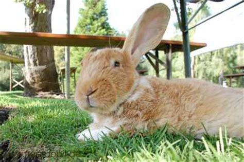 Hasen Im Garten by Freilaufende Kaninchen Im Garten Mit Elektrischem Weidezaun Horizon