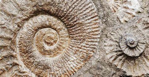 imagenes de fosiles f 243 siles origen y caracter 237 sticas historia de la vida