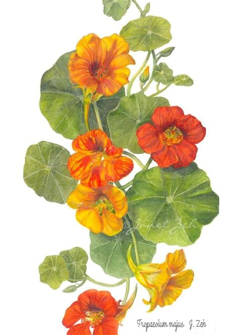 libro botanical painting in gouache 1000 images about botanical art on