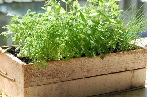 herbs   grow  containers  garden glove