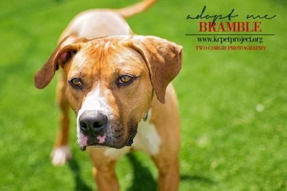 puppy adoption kansas city how to quickly get dogs adopted decreasing time of stay in shelters thatmutt