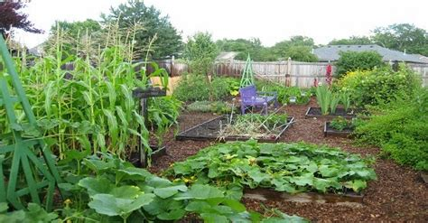 Natural Cures Not Medicine Florida Couple Sues City After Family Vegetable Garden