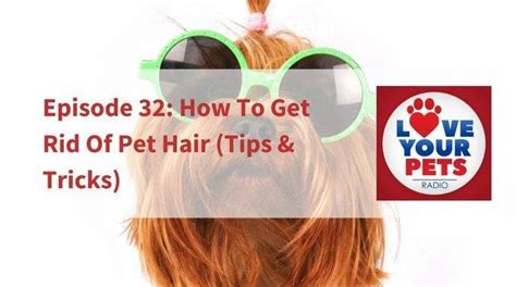 how to get rid of dog hair in house pet sitters ireland blog pet facts pet news tips and reviews