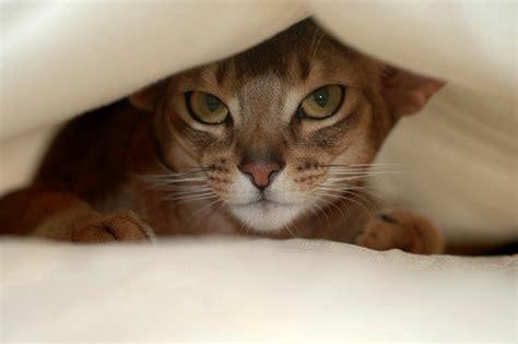 Maravillosa  Fotos Tarjetas De Navidad #7: Cat-hiding-under-blanket.jpg