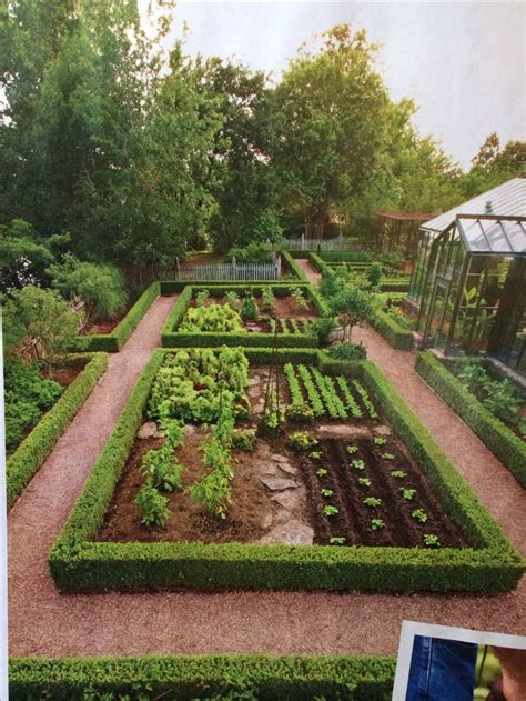 25 best ideas about japanese boxwood on yard - Vegetable Garden Definition