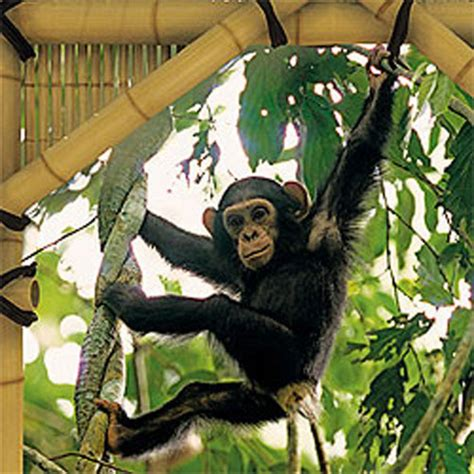 monkey wall murals monkey jungle treehouse prepasted large wall mural accent