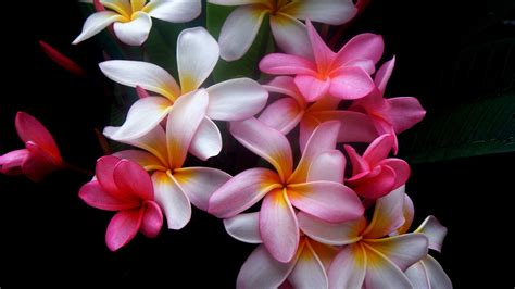 beautiful flower wallpaper beautiful flowers wallpaper 388623